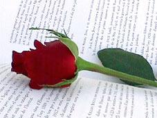 rosallibre.jpg